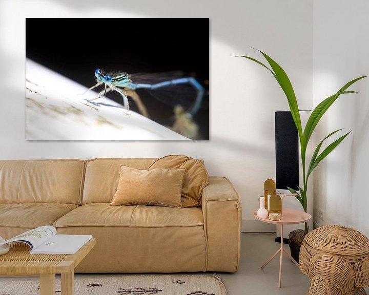 Beispiel: Libellen von Thomas Jäger