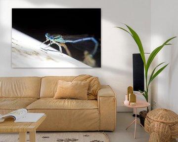 Libellen von Thomas Jäger