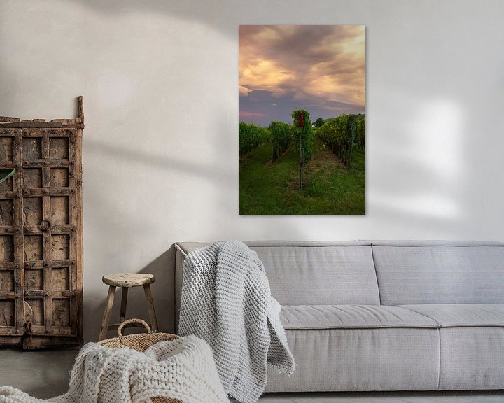 Sfeerimpressie: Wijnvelden in de Elzas, Frankrijk tijdens zonsondergang van Discover Dutch Nature