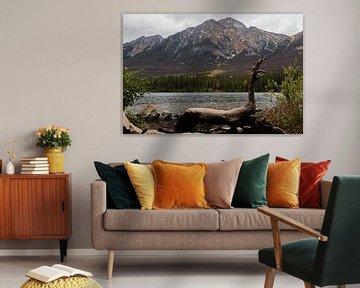 National park in Canada, natuur, landschap, rockie mountain van Jessica Jongeneel
