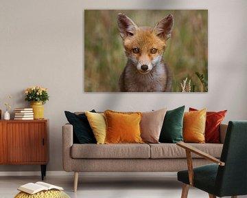 Portret van een jonge vos in de Nederlandse natuur in een lichte setting