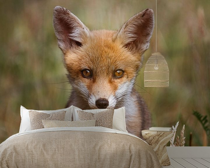 Sfeerimpressie behang: Portret van een jonge vos in de Nederlandse natuur in een lichte setting van Maarten Oerlemans