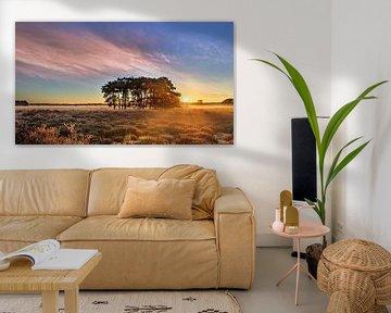 Sunrise met dramatische wolken op een heide met bomen van Tony Vingerhoets
