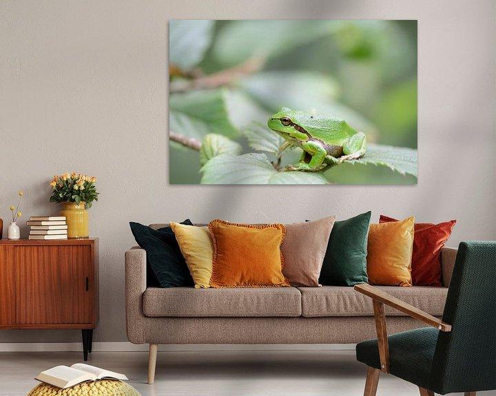 Sfeerimpressie: Groene boomkikker op een blad van een bramenstruik van iPics Photography