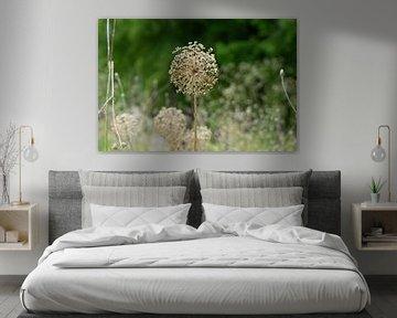 Trockenblumen von Henriette Tischler van Sleen