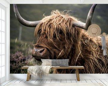 Schotse Hooglander | Schotland | Fotoprint van Sander Spreeuwenberg