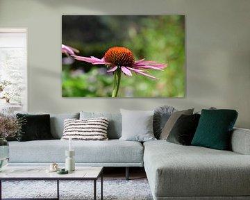 Echinacea Purpurea Lila Sonnenhut von Robin Verhoef