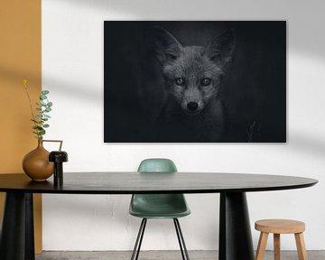 Portret van een jonge vos in de Nederlandse natuur in zwart-wit