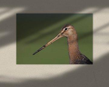 nationale vogel van Jaap Bakker