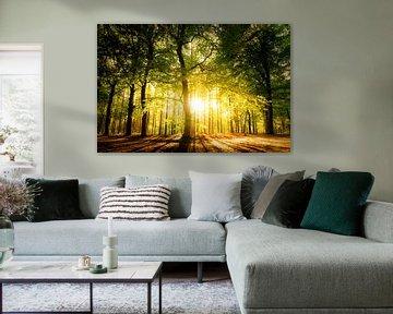 Sonne im Wald von Paul Kipping