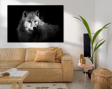 poolwolf van Wildpix imagery