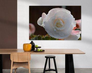 Prachtige bloem von Marchetti Fotografie