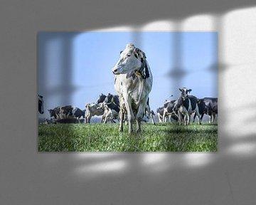 Kühe auf der Wiese von Vera van Praag Sigaar
