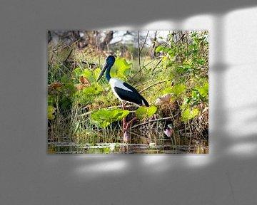 Corroboree Jabiru - Vogel - Feuchtgebiete Australiens von Liefde voor Reizen