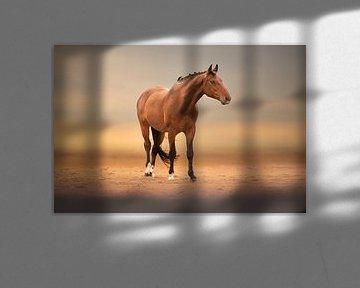 paard op het zand strand van Kim van Beveren