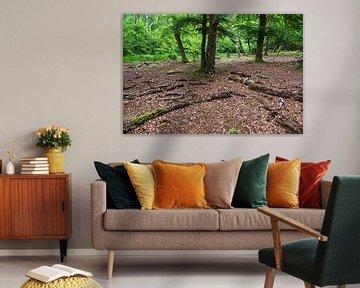 Bäume und Baumstämme im Darßwald von Rico Ködder