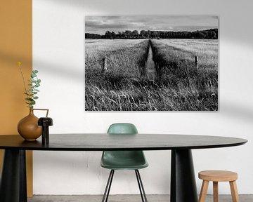 Graben und Wiese in Schwarz-Weiß von Henk van Mourik