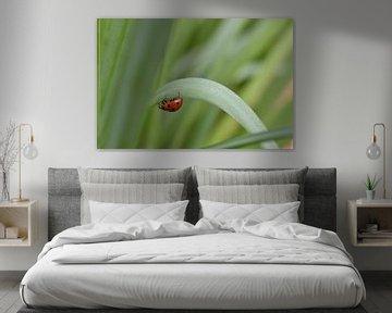 Ein Marienkäfer auf einer Reise durch die Natur von Highthorn Photography