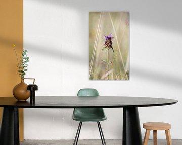 Violette Blume von Kashja Neels