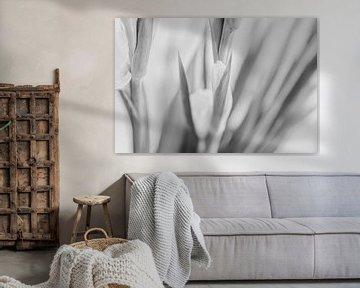 schwarz-weiße Blume von Bart Pook