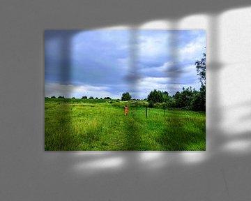 Dwalen in de polders van Jacco Aalbers