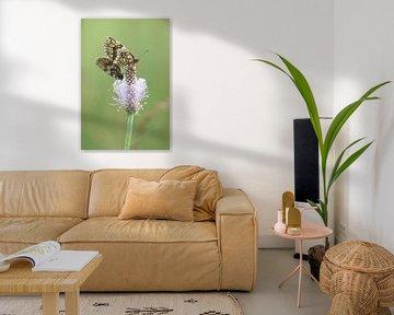 Kwartelkorenvlinder I - Melitaea athalia van Iris Volkmar