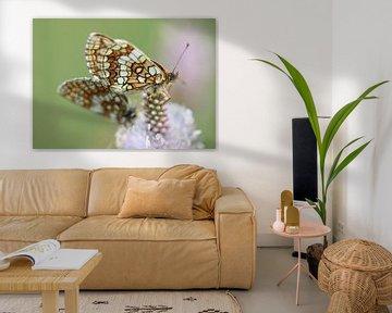Kwartel Tarwe Vlinder II - Melitaea athalia van Iris Volkmar