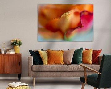 Verwelkende oranje roos. van Monique van Helden