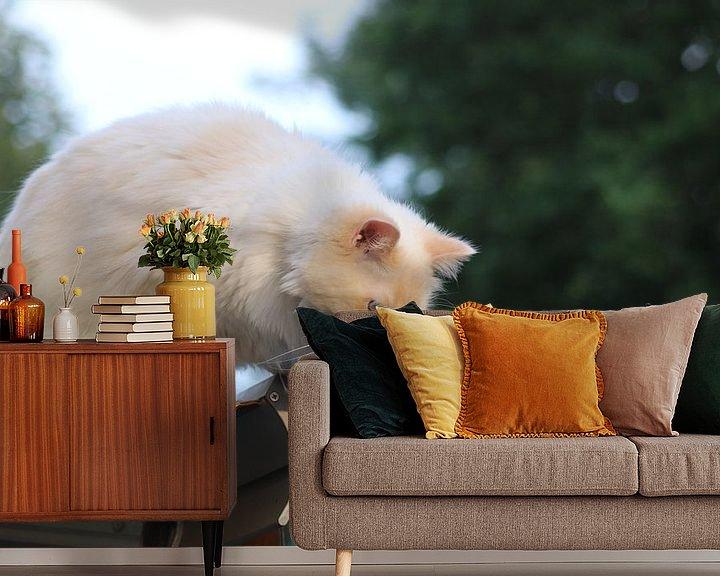 Beispiel fototapete: Das Leben der Katze von Fotografiemetangie