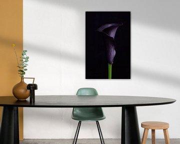 Waardigheid, Bloemen kleur symboliek van Clazien Boot