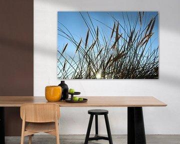 Gras in de zon van Gerando Sinke Hobbyfotografie
