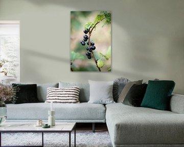 Schwarze Beeren von Kashja Neels