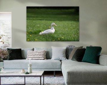 Canard blanc dans l'herbe verte sur Audrey Nijhof
