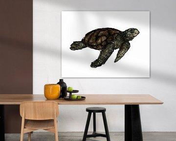 Schildkröte von DominixArt