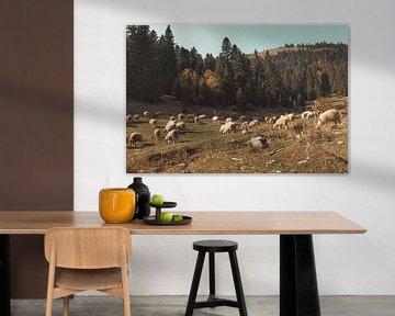 Grazende schapen in de heuvels en bergen van Rogove, Kosova van Besa Art