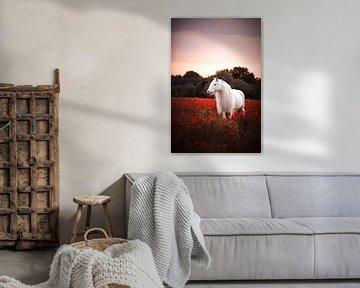 Kesselflicker im Mohnfeld / Niederlande / Pferd / Tierfotografie / Buntes Bild von Jikke Patist