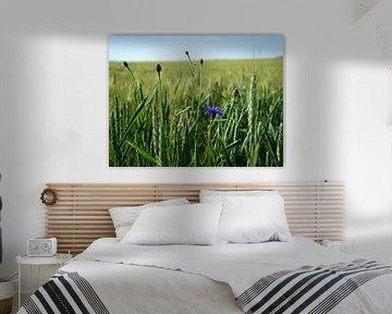 Kornblume in französischer Landschaft von BriGit Stokman