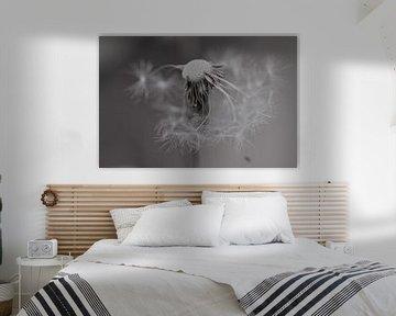 Toter Löwenzahn in Schwarz-Weiß von Audrey Nijhof