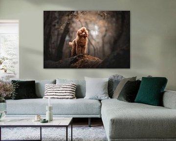 Warm gekleurd portret van een Poedel hond in het bos van Lotte van Alderen