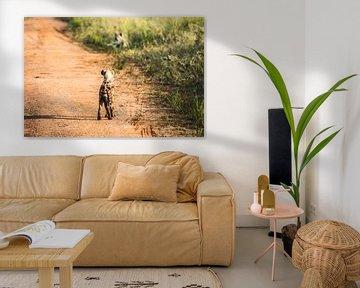 Hyena / Afrikaans landschap / Natuurfotografie / Oeganda van Jikke Patist