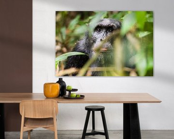 Chimpansee / Afrikaans landschap / Natuurfotografie / Oeganda van Jikke Patist