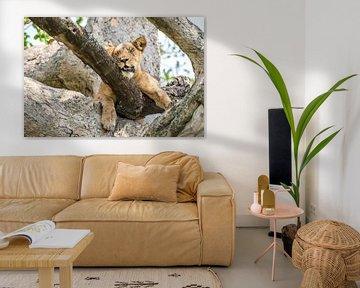 Ruhige Löwin / Afrikanische Landschaft / Naturfotografie / Uganda von Jikke Patist