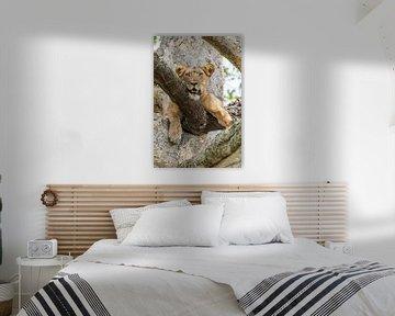 Baumkletternde Löwin / Afrikanische Landschaft / Naturfotografie / Uganda von Jikke Patist