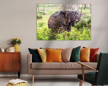 Augenkontakt mit Elefant / Afrikanische Landschaft / Naturfotografie / Uganda von Jikke Patist