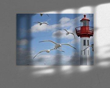 Zilvermeeuwen in de vlucht in de haven van 7Horses Photography