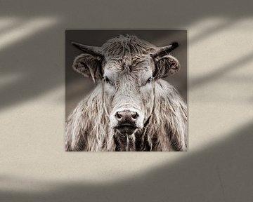 Nahaufnahme Kuh von Diana van Geel