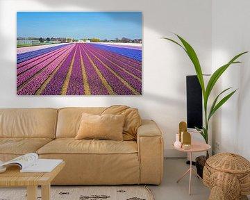 Luftaufnahme von blühenden Tulpen auf dem Land in Nordholland in den Niederlanden von Nisangha Masselink