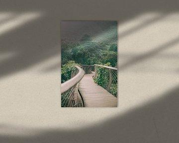 Botanische tuin Kirstenbosch in Kaapstad |  Botanische foto print voor aan de muur van Emma van der Schelde