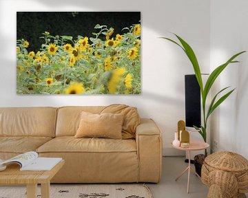 Zonnebloemen van Niels Hens