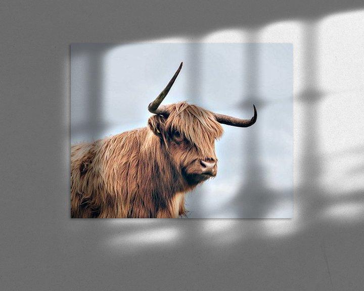 Beispiel: Highland cow von PictureWork - Digital artist
